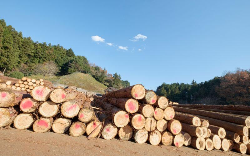 産地証明された木材